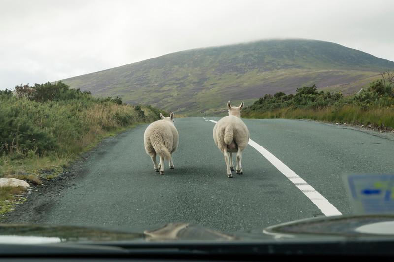 Ireland_2018_08_13_0303.jpg