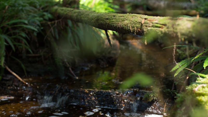 150913_Nikki_Forest_5334.jpg