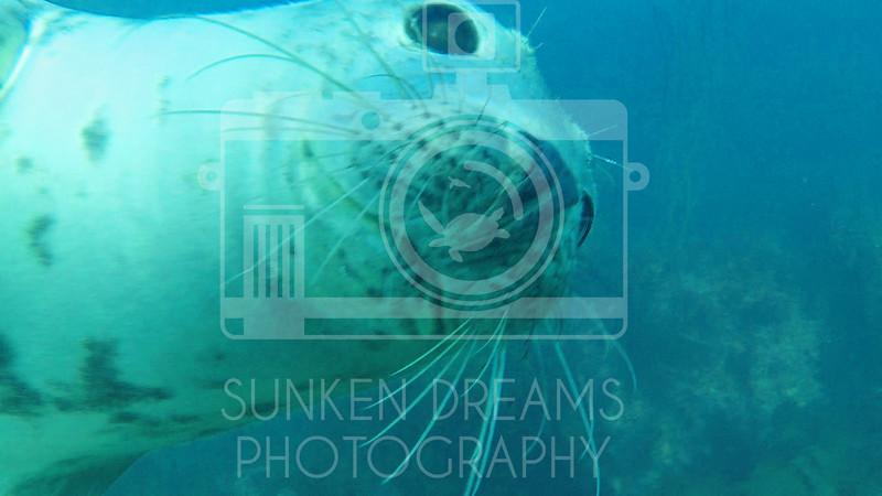 Lundy Island Edit.Still090.jpg