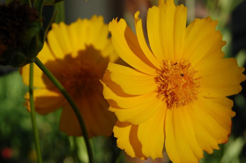 2008 05 02_0060.JPG