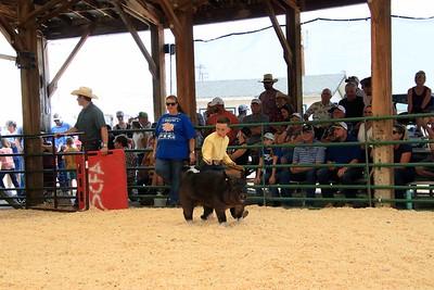 Junior Swine Showmanship
