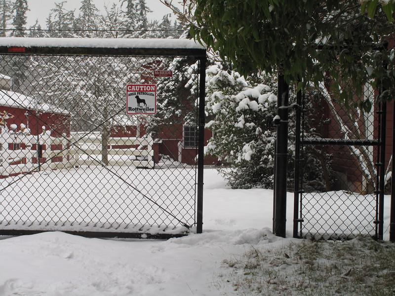 IMG_0385 snow dog signS .jpg