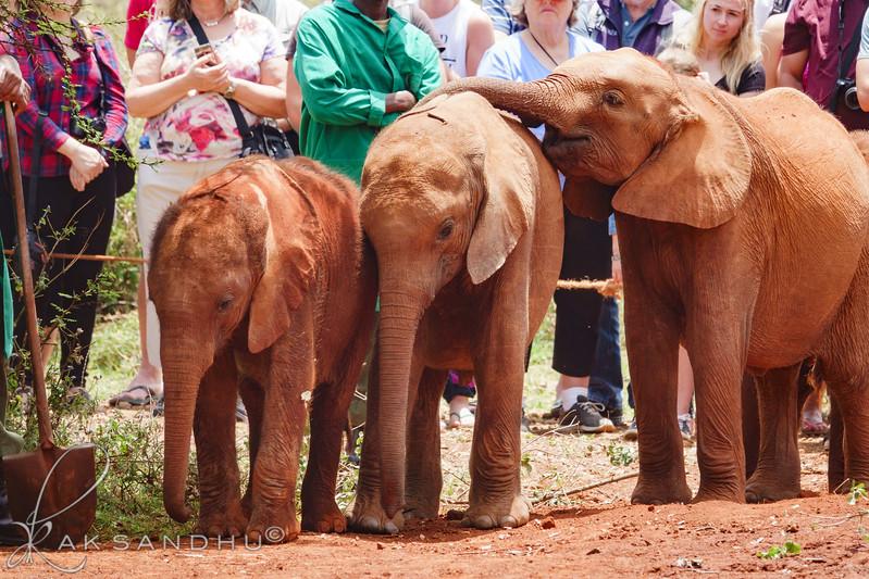 Safari-Africans-168.jpg