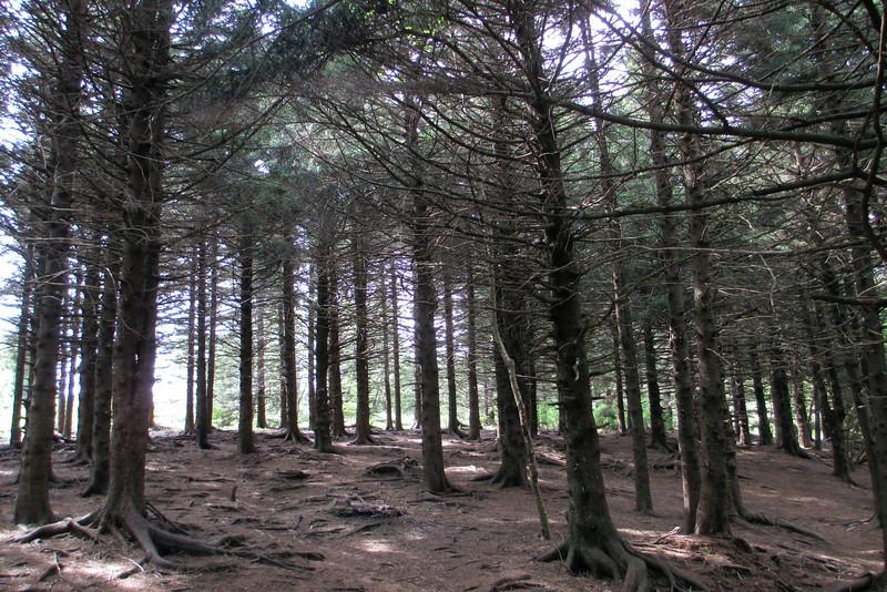 Mountains-to-Sea Trail (5,840')