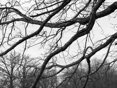 03-22-2020-tree