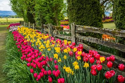 Mount Vernon Roozengaarde Display Gardens