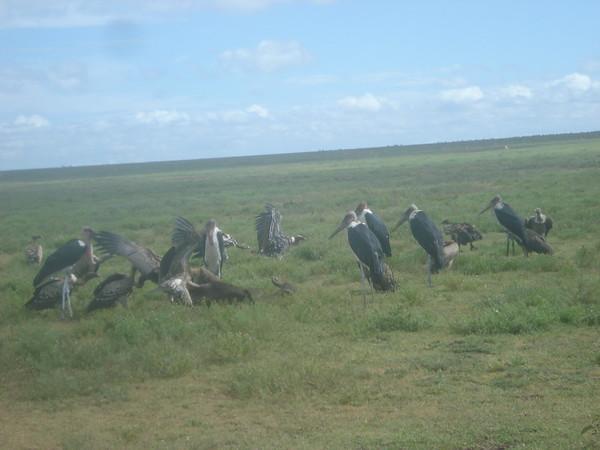 Tanzania Migration (Part 6)