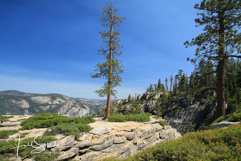 Yosemite 2018 -42.jpg