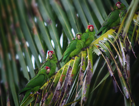 Parrots, Macaws, Tropical birds & Rarities