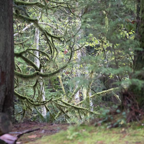 Camp Potlach 1 (56 of 145).jpg