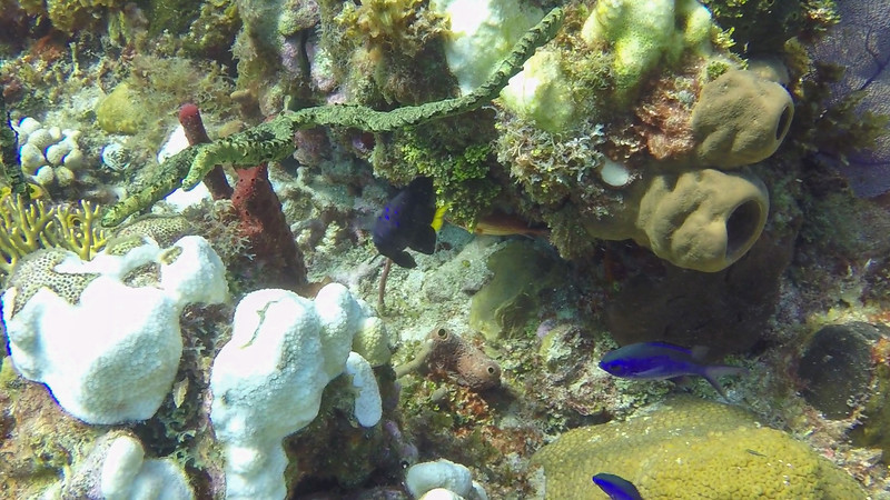 2019-11-15-18 Jamaica Dive Photos-untitled (23 of 115)-1-012.jpg