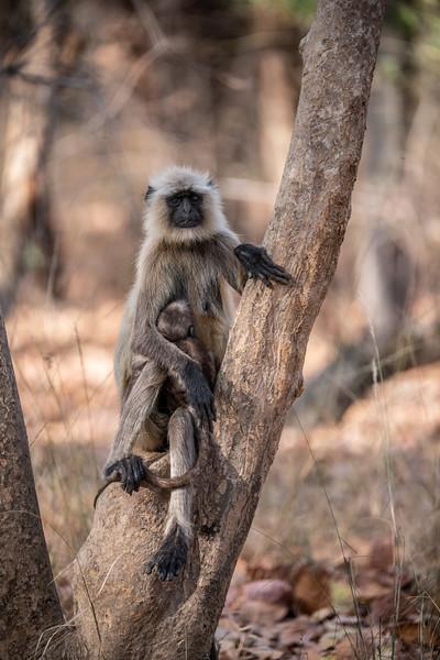 India_April_2019-2255.jpg