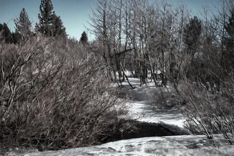 feb 17 -mammoth creek.jpg