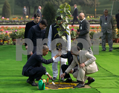 india-insists-obamas-tree-is-not-dead