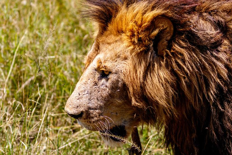 Kenya 2015-02458.jpg
