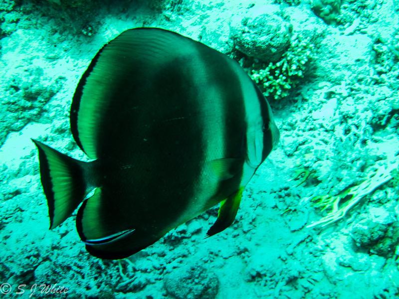 SharmJuly2012_015.jpg