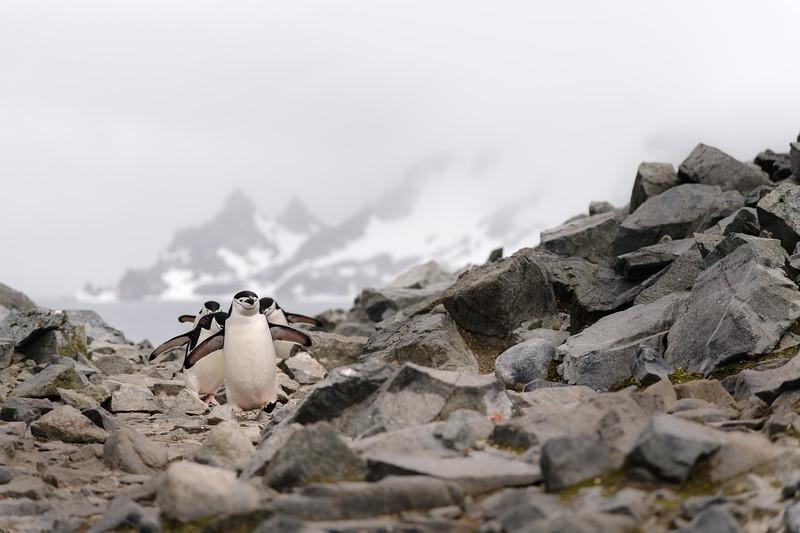 Antarctica-1421.jpg