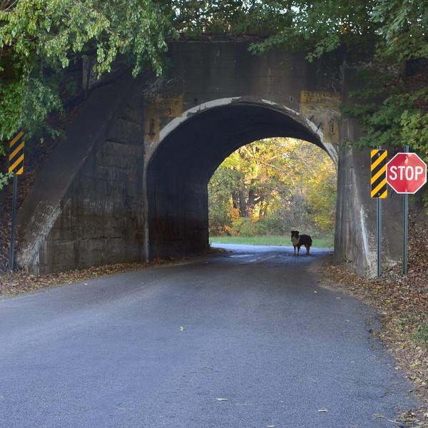 dog tunnel.jpg