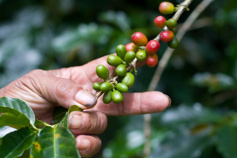 coffee-beans_4809589000_o.jpg