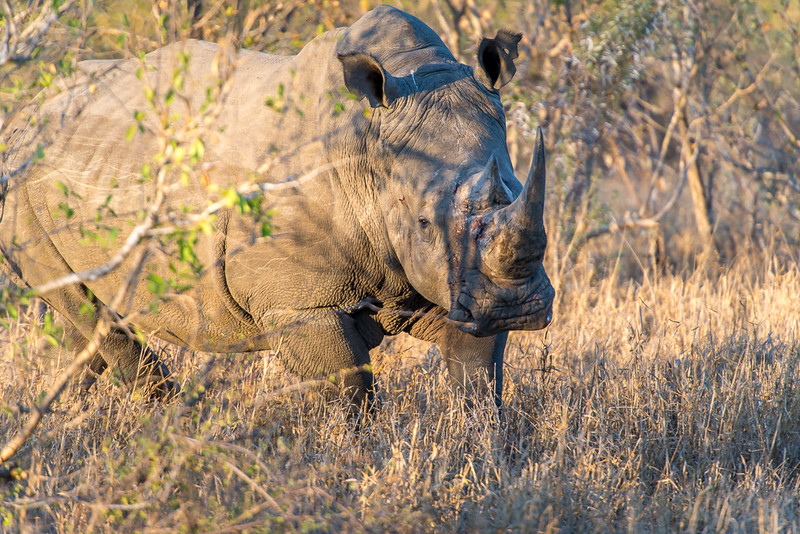 Zuid Afrika 2015 062.jpg