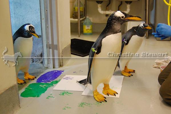 Penguins Painting