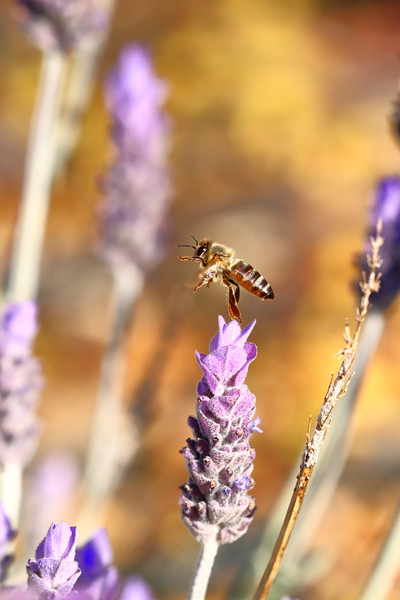 0715 - Wineries and Bees