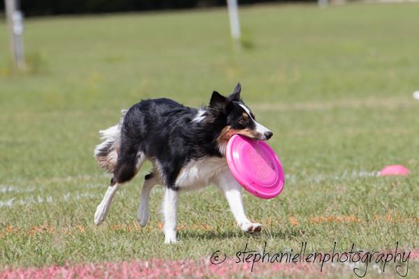 _MG_2964Up_dog_International_2016_StephaniellenPhotography.jpg