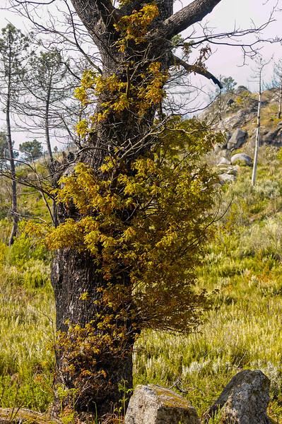 Vouzela-PR2 - Um Olhar sobre o Mundo Rural - 17-05-2008 - 7360.jpg