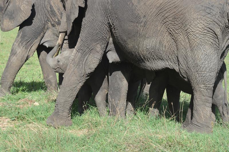 East Africa Safari 347.jpg