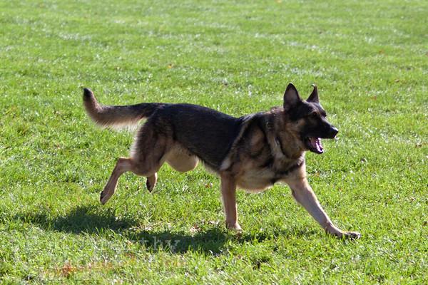 Schutzhund 10/20/2012