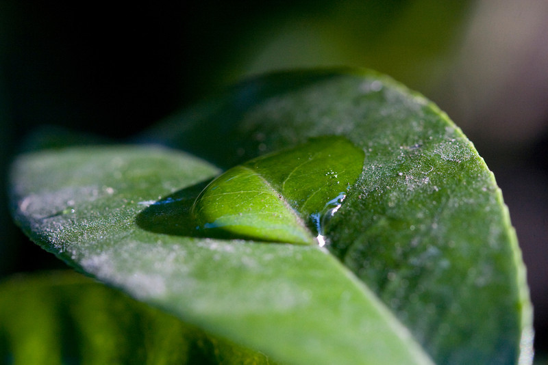 leaf large medial water droplet 800iso.jpg
