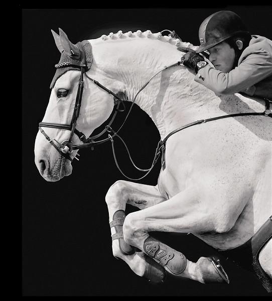 equine sport final copy-X3.jpg