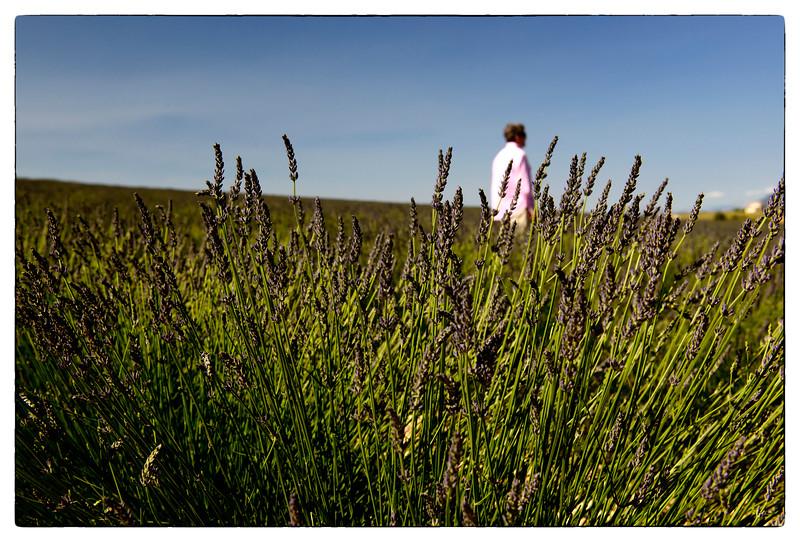 dale in lavender.jpg