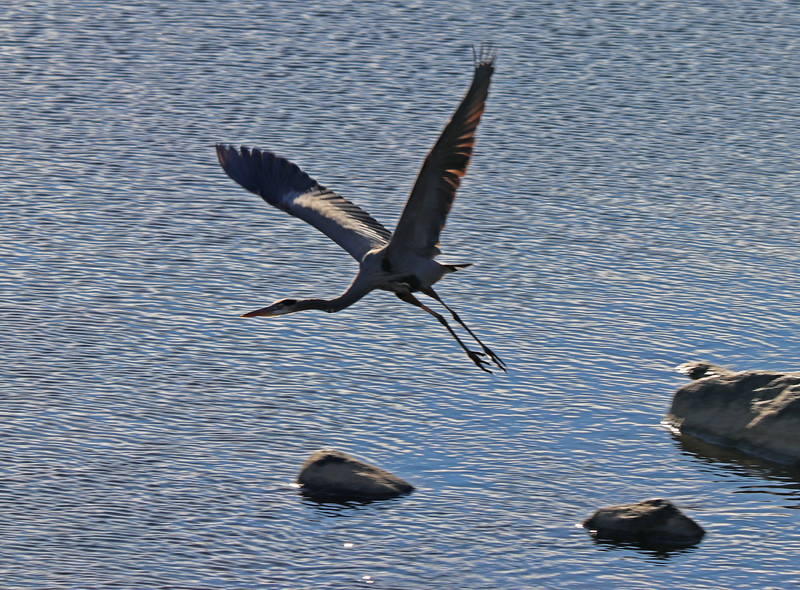 Heron ascending 3