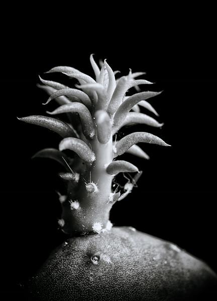 Cactus--2.jpg