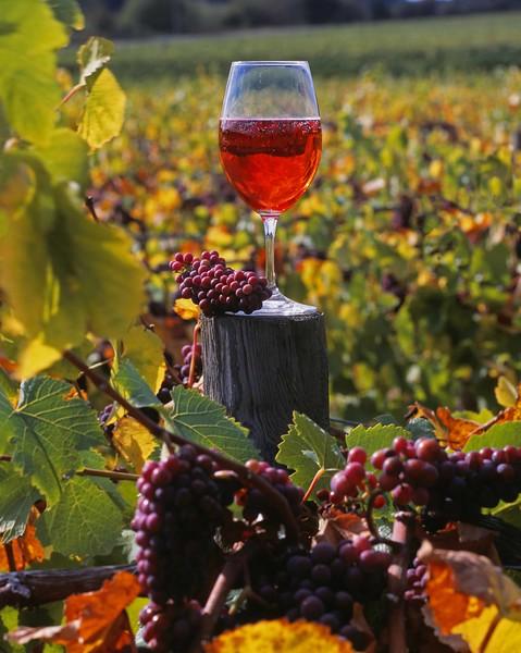 Vineyard and wine glass, Eola Hills