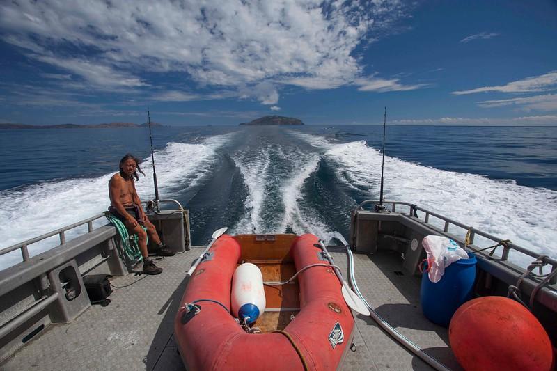 20150303 Dave at Stevens Island - D'Urville Trip -_MG_9498  ©John.Mathews@xtra.co.nz.jpg