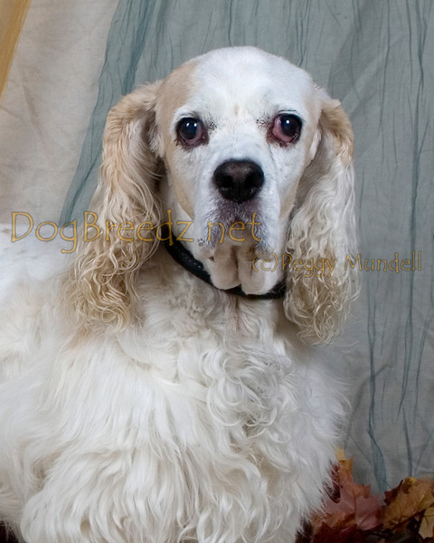 Grooming Lounge - Buffy Thornberry