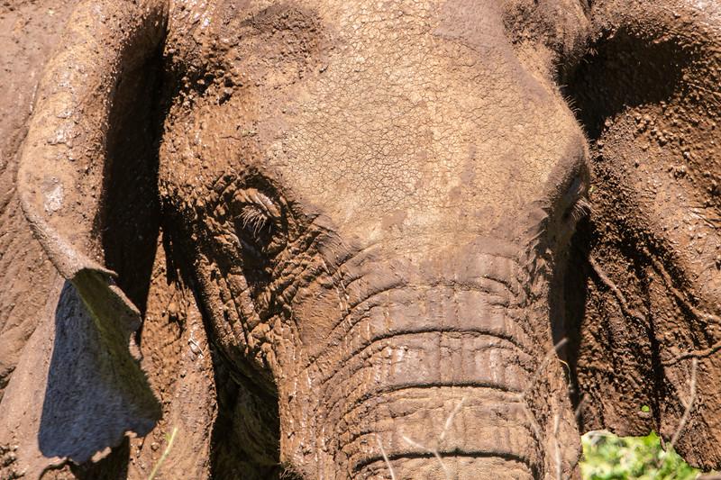 Africa 19 Jpegs_65.JPG