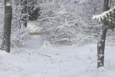 Snow - Feb '14