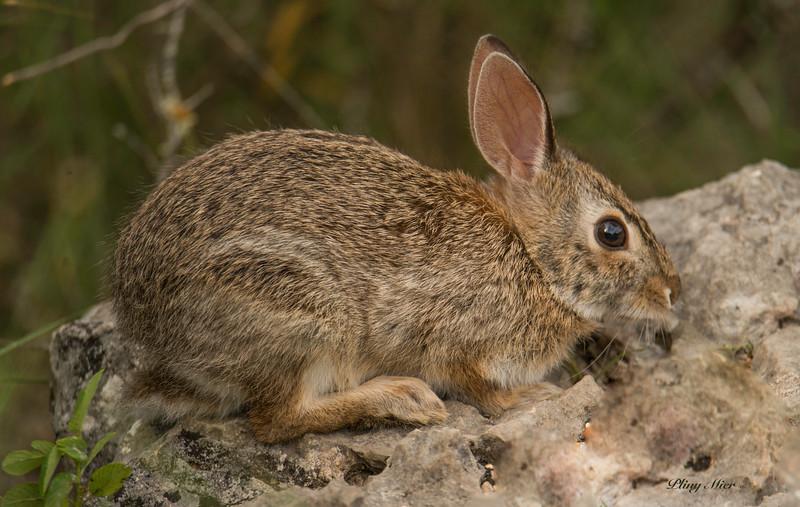 Bunny_DWL9709.jpg