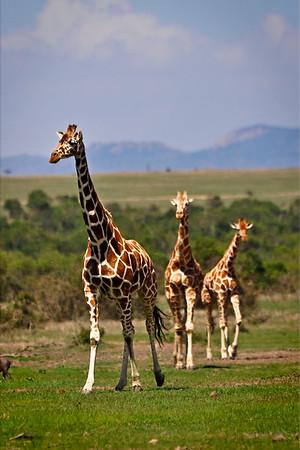 2009 Kenya