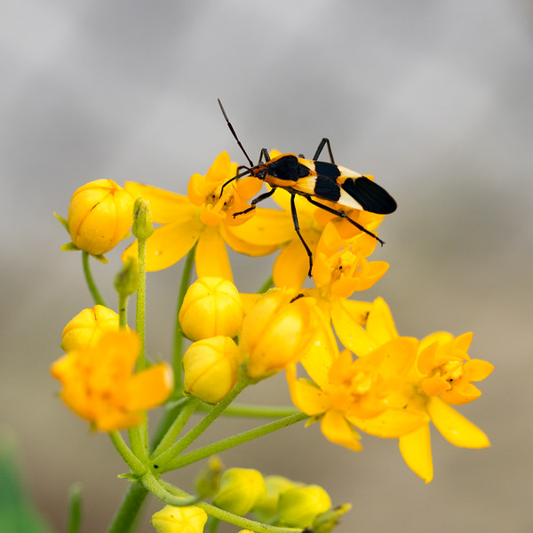 bug-on-flower-1.jpg