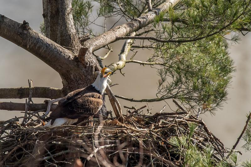 ulster-eagle-66.jpg