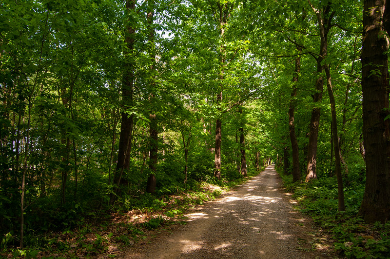 Nationaal Park Hoge Kempen - Duinengordel, omgeving Donderslag 38.jpg