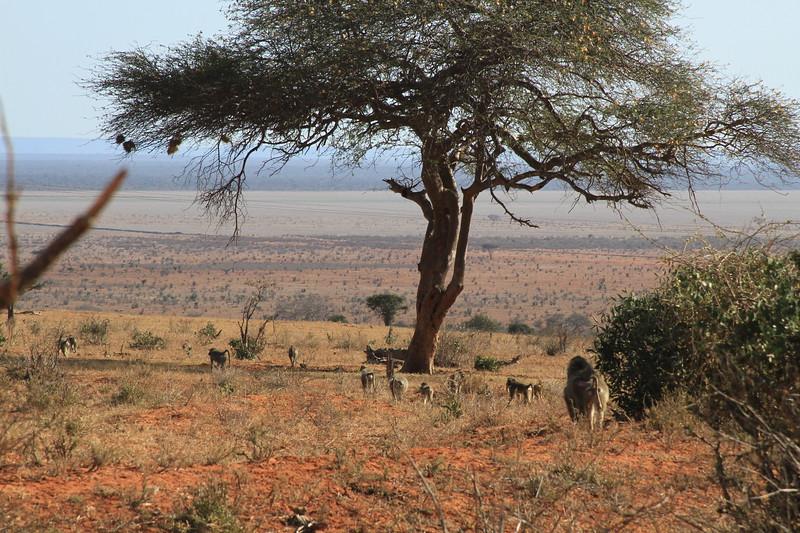 Kenya 2017 #1 3420.JPG