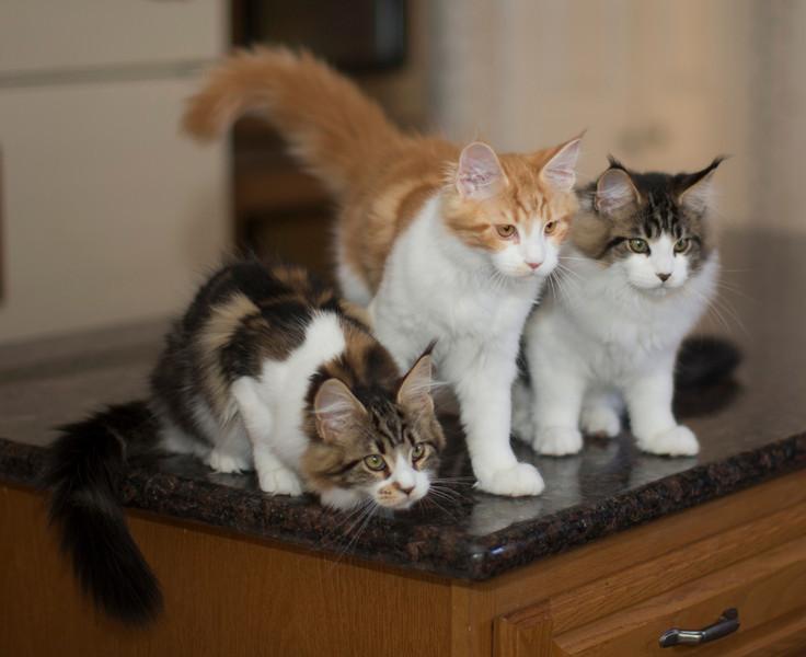 Kittens289.jpg