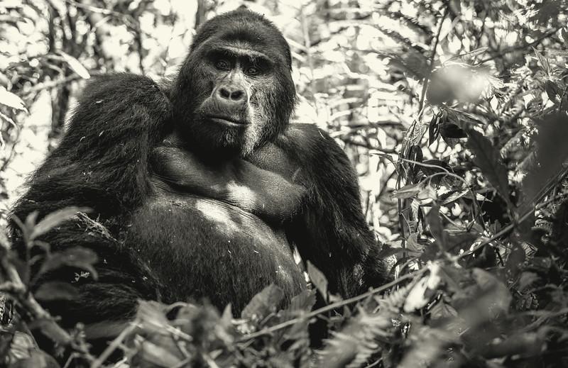 Uganda_T_Gor-500.jpg