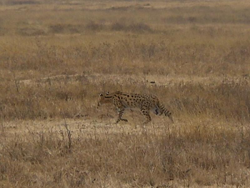 Ngorongoro crater conservation area - 3