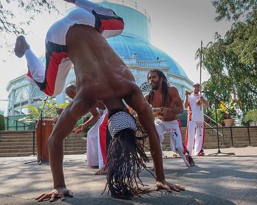 Bronx Botanical Gardens - The Living Art of  Burle Marx and Brazil